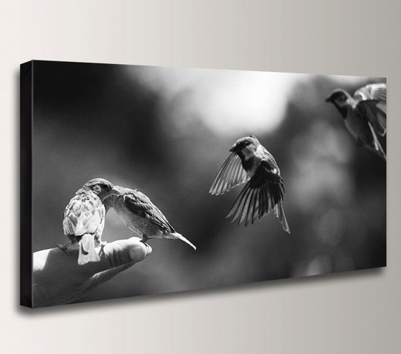 "Nature Photography - Panorama - Black & White - Canvas Print - Birds - Art Print - "" Bird in Hand """