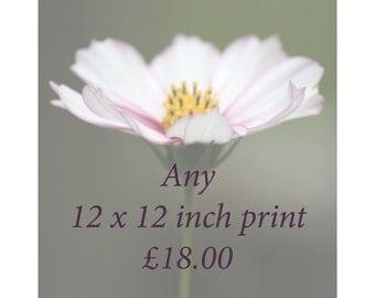 12 x 12 print price