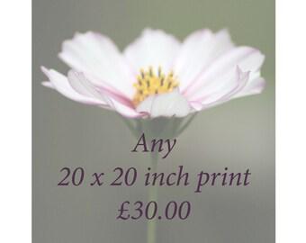 20 x 20 print price
