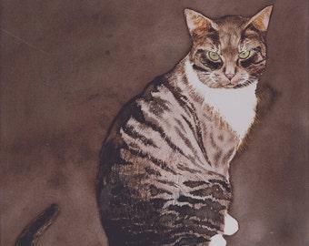 McGourty's Cat
