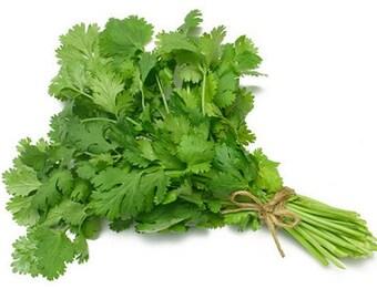 Heirloom 300 SEEDS Coriandrum Coriander Chinese parsley Cilantro Herbs Fresh Organic F60