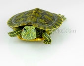 Turtle Smiling - Color Photograph