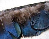 Vintage Trim: 1 Foot of Gorgeous Blue/Green and Brown Feather on Black Satin Ribbon by BySupply