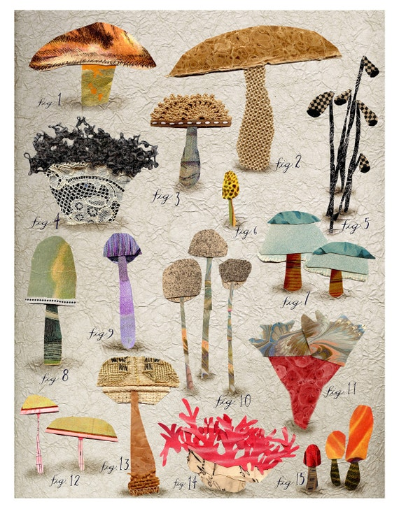 mixed media non edible mushroom botanical 1, print