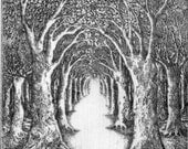 Limited edition etching 'Into the Forest' by Tricia Newell
