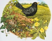 Pack of 5 cards 'Blackbirds' illustrated by Tricia Newell