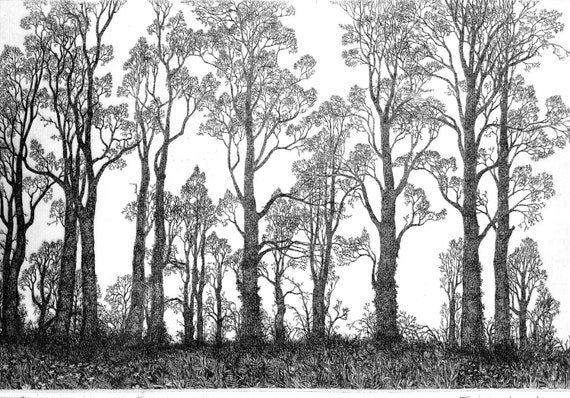 Limited edition etching 'Row of Elms' by Tricia Newell