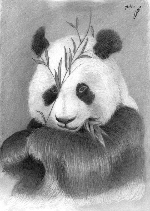 Items similar to Panda - pencil drawing on Etsy