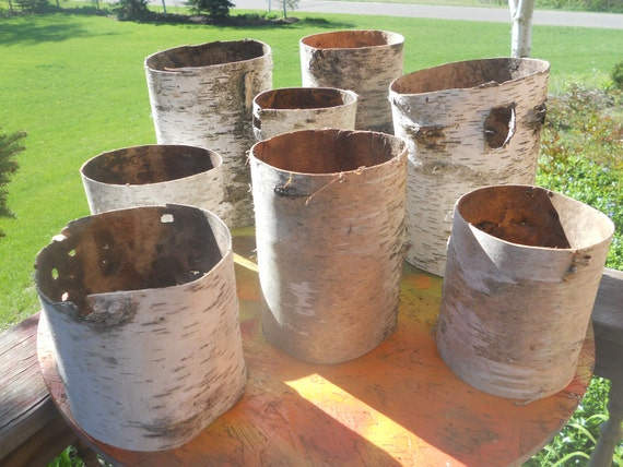 8 Birch bark tubes vase sleeves