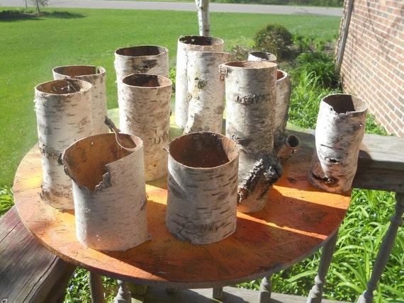 12 Birch bark tubes vase sleeves