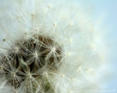 Nursery Photography - Nature Photography - Whimsical - Wish - Dandelion - Nature - Fine Art Photography Print - Blue White Home Decor