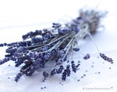 Flower Photography - Lavender Photograph - 8x10 Fine Art Photography Print - Lavender White Purple Home Decor - BLintonPhotography