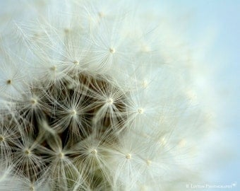 Nursery Photography - Nature Photography - Whimsical - Wish - Dandelion - Nature - Fine Art Photography Print - Blue White Home Decor