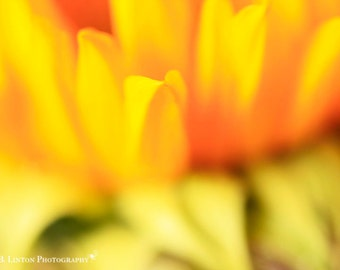 Flower Photography - Sunflower Photograph - Fall Flowers - Fall - Flower Photo - Sunflowers - Fine Art Photography Print - Yellow Home Decor