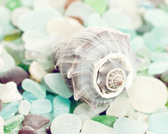 Beach Glass Photography - Sea Glass Photograph - Shell Photograph - Fine Art Photography Print - Green Blue Brown Home Decor