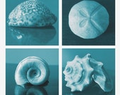 Turquoise Ocean Blue Sea Shell Set 4 x 4 inch photo collection. Sea Treasures Set I