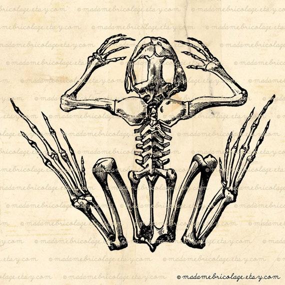Frog bone anatomy