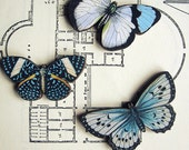 Wood Butterfly Brooch