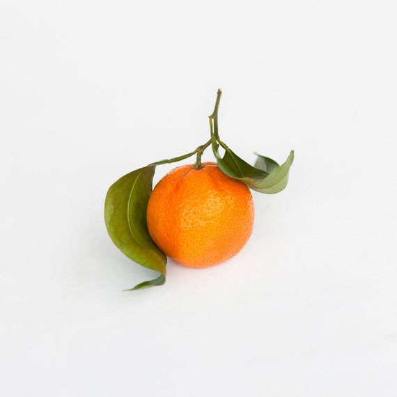 Orange Fruit Food Photograph Art Print. Great for Kitchen or Nursery walls. 5x5 Archival Print