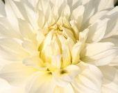 Dream in White 12x12cm photographic print