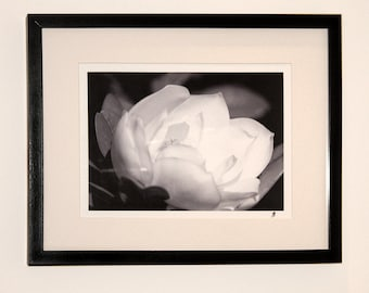 Magnolia framed black-and-white photographic print