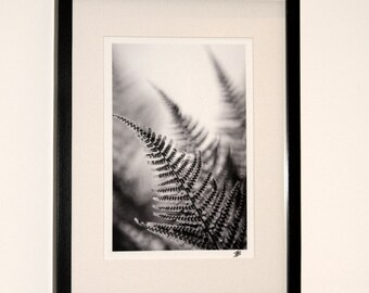 Black and white photograph of ferns mounted in a black frame