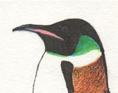 "ACEO of ""Mr. Manchot""   //      The very dapper penguin"