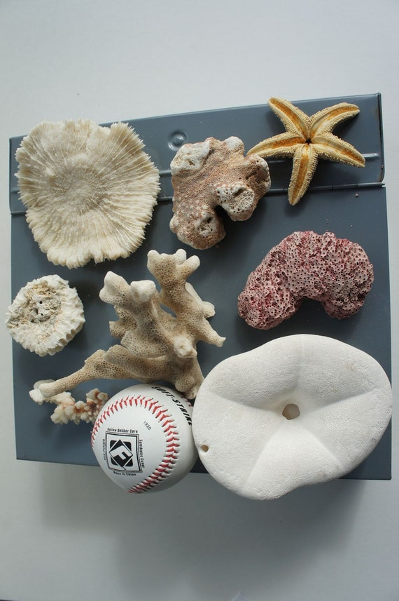 Vintage Collection of Corals, Sea Biscuit and Starfish