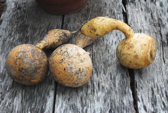 Diane Carnevale: October 2013 |Dried Gourds Goose