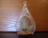 Air Plant in Pear Shaped Glass Terrarium with Sand