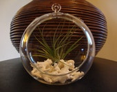 Air Plant Glass Terrarium- Tillandsia with Coral