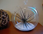 Air Plant & White Sand in Glass Terrarium