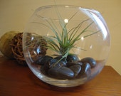 Air Plant in Round Bowl with Black River Stones