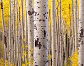 Special Listing for Hannah - SALE Aspens Panoramic 14x42