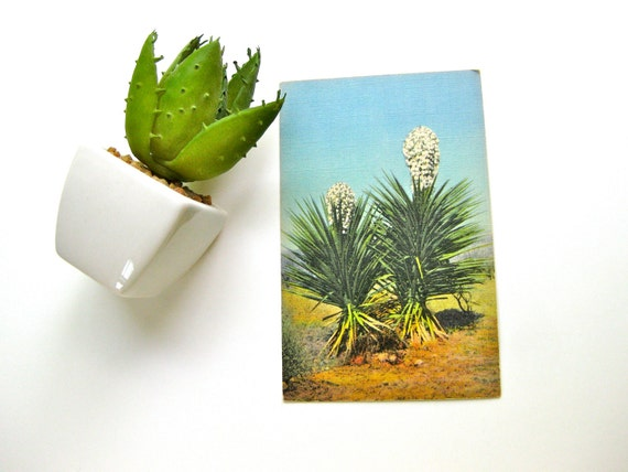 Postcard Vintage Linen One Cent Spanish Daggers Genuine Curteich Yucca Collectible Unused