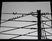 Paper cut silhouette: Birds on a wire