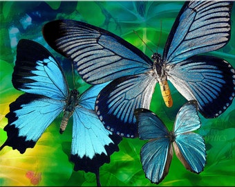 Blue Butterflies II