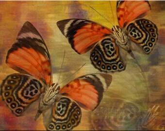 SALE! Golden Butterflies Canvas 11 x 14 ready to hang