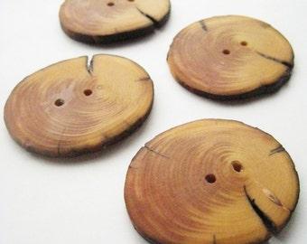 "Handmade Wooden Buttons - Blue Spruce (4 qty) - 1 7/8"" Diameter x 3/16"" Thick"