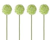 SET 4 Decoflowers Allium Light Green