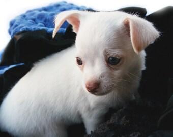 Minky Dog Blanket Blue And Black