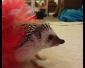 Red and White Hedgehog Tutu