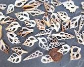 10 Tiny Cut Seashells Assortment