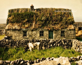 THATCHED ROOF COTTAGE, with Cow. Irish Landscape. Ireland Photo, Fine Art Photography, Aran Islands, 8 x 10