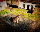 Cat Spring Country Courtyard Photo Print