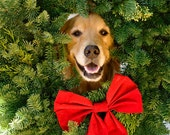 Jolly Golden Retriever Holiday Card