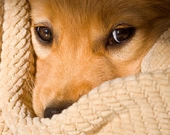 Puppy Eyes, Golden Retriever Photo Notecard Set