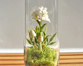 Exotic Dendrobium Orchid Terrarium in Recycled Glass