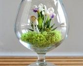 Tiny Tropical Cattleya Orchid Terrarium in Brandy Glass