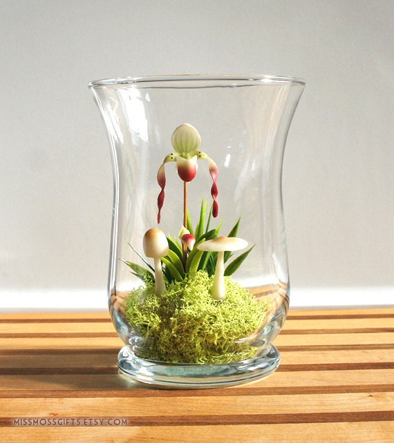 Miniature Lady Slipper Orchid Terrarium In Vintage Glass